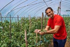 Agricoltore che lavora nella sua serra Fotografia Stock