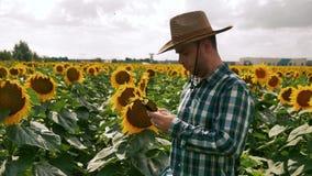 Agricoltore che manda un sms sullo smartphone nella piantagione del girasole archivi video