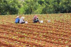 Agricoltore che mangia pranzo sul campo Fotografia Stock Libera da Diritti