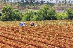 Agricoltore che mangia pranzo sul campo Fotografie Stock