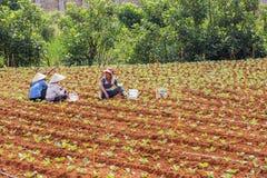 Agricoltore che mangia pranzo sul campo Fotografia Stock