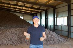 Agricoltore che mostra di recente le patate Fotografie Stock Libere da Diritti