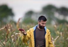 Agricoltore che mostra la pannocchia di granturco con la malattia Fotografie Stock Libere da Diritti