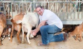 Agricoltore che munge le capre Fotografia Stock