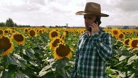Agricoltore che parla sullo smartphone nella piantagione del girasole archivi video