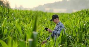 Agricoltore che per mezzo del computer digitale della compressa, piantagione coltivata del cereale nel fondo Applicazione moderna archivi video