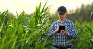 Agricoltore che per mezzo del computer digitale della compressa, piantagione coltivata del cereale nel fondo Applicazione moderna stock footage