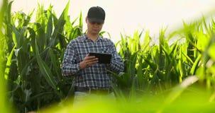 Agricoltore che per mezzo del computer digitale della compressa, piantagione coltivata del cereale nel fondo Applicazione moderna video d archivio