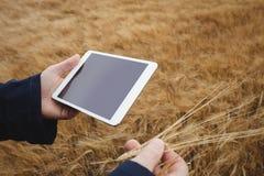 Agricoltore che per mezzo della compressa digitale mentre controllando le orecchie di grano Fotografia Stock Libera da Diritti