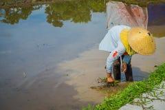Agricoltore che pianta alcuni semi del riso in una terra sommersa in terrazzi, Ubud, Bali, Indonesia Immagine Stock