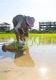 Agricoltore che pianta le costruzioni Immagine Stock Libera da Diritti