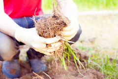 Agricoltore che pianta raccogliendo le verdure organiche nell'azienda agricola urbana Fotografie Stock