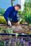 Agricoltore che pianta un fiore dell'iride in suolo Fotografia Stock Libera da Diritti