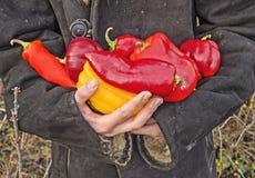 Agricoltore che posa con i peperoni fotografie stock libere da diritti