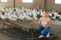 Agricoltore che posa dentro con le anatre Fotografia Stock Libera da Diritti