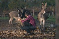Agricoltore che prende cura dell'asino all'aperto Fotografia Stock Libera da Diritti