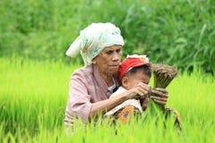 Agricoltore che prepara i germogli del riso Fotografie Stock