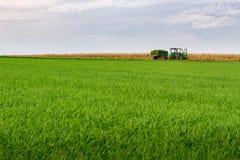 Agricoltore che raccoglie erba Fotografia Stock Libera da Diritti