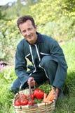 Agricoltore che raccoglie gli ortaggi freschi in giardino Immagine Stock Libera da Diritti