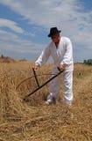 Agricoltore che raccoglie grano Immagini Stock