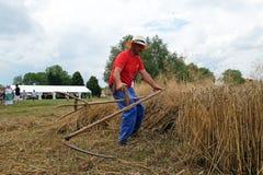 Agricoltore che raccoglie grano con la falce Immagine Stock Libera da Diritti