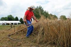 Agricoltore che raccoglie grano con la falce Fotografia Stock