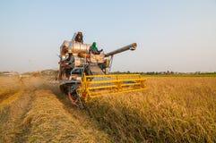 Agricoltore che raccoglie riso nella risaia con l'automobile del raccolto Immagine Stock Libera da Diritti