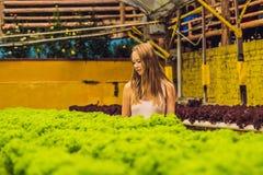 Agricoltore che ricerca pianta nell'azienda agricola idroponica dell'insalata Agricoltura a Fotografia Stock