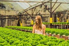 Agricoltore che ricerca pianta nell'azienda agricola idroponica dell'insalata Agricoltura a Fotografie Stock