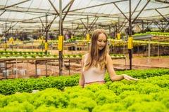 Agricoltore che ricerca pianta nell'azienda agricola idroponica dell'insalata Agricoltura a Fotografie Stock Libere da Diritti