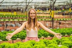 Agricoltore che ricerca pianta nell'azienda agricola idroponica dell'insalata Agricoltura a Immagine Stock