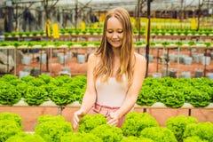 Agricoltore che ricerca pianta nell'azienda agricola idroponica dell'insalata Agricoltura a Immagini Stock Libere da Diritti