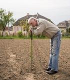 Agricoltore che scava nel giardino Immagini Stock