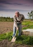 Agricoltore che scava nel giardino Fotografia Stock Libera da Diritti