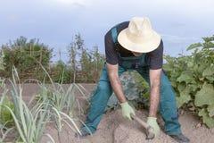 Agricoltore che semina il suo campo Fotografia Stock