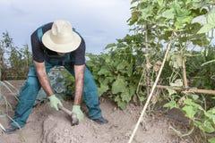 Agricoltore che semina la terra Fotografia Stock Libera da Diritti
