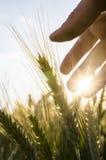 Agricoltore che si preoccupa per il suo campo Fotografie Stock Libere da Diritti