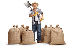 Agricoltore che sta fra i sacchi della tela da imballaggio Fotografia Stock
