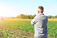 Agricoltore che sta nel campo con le piante verdi Immagini Stock