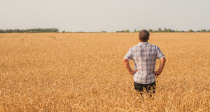 Agricoltore che sta in un giacimento di grano Immagine Stock Libera da Diritti