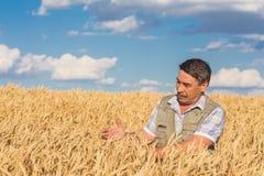 Agricoltore che sta in un giacimento di grano Immagini Stock Libere da Diritti