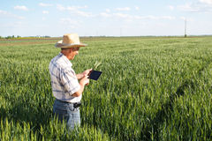 Agricoltore che sta in un giacimento di grano e che esamina compressa Immagine Stock