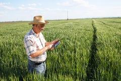 Agricoltore che sta in un giacimento di grano e che esamina compressa Immagine Stock Libera da Diritti