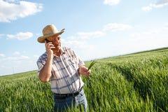 Agricoltore che sta in un giacimento di grano e che parla sul telefono Fotografia Stock