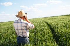 Agricoltore che sta in un giacimento di grano e che parla sul telefono Fotografie Stock Libere da Diritti