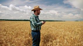Agricoltore che swiping sullo smartphone nella piantagione del grano video d archivio