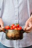 Agricoltore che tiene i pomodori ciliegia freschi Raccolto delle verdure Fotografia Stock Libera da Diritti