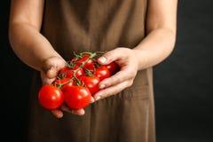 Agricoltore che tiene i pomodori maturi in mani Immagini Stock