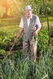 Agricoltore che tiene le cipolle verdi in orto Immagine Stock