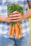 Agricoltore che tiene mazzo di carote organiche Fotografia Stock